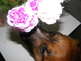 Bear smelling the flowers by BlueIvyViolet