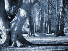 Old Trees Alley infrared... by MichiLauke