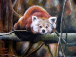 Relaxing Red Panda by MoterPants