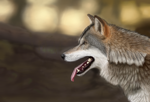 Wolf by LauriieT