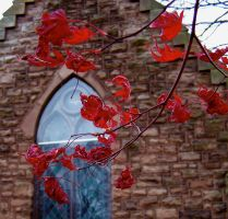Red Autumn Leaves among dead by drywall420