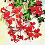 Red Geranium on Canvas by allison731