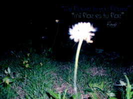 My flower is you flower by kinata09