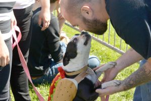 2014 Dog Festival, A Hot Dog Kiss 2 by Miss-Tbones