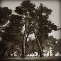'songs from the wood...' IV by Kaarmen