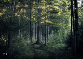 Evening in the forest by orlibraorli