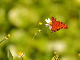 Little Things Mean the Most by AdARDurden