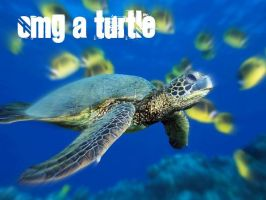 Turtle by bethrainbow