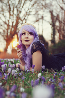 Crocus Princess 1 by Estelle-Photographie