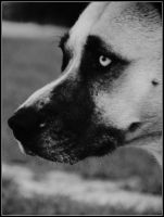 Rusty Profile BW by sentry-sight