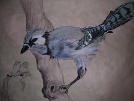 Blue Jay colored by Lupus-Lily