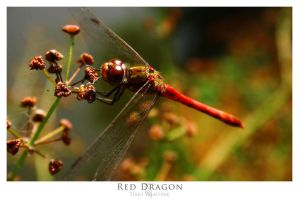 Red Dragon by eightball