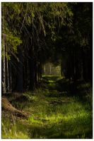 Into the woods by billysphoto