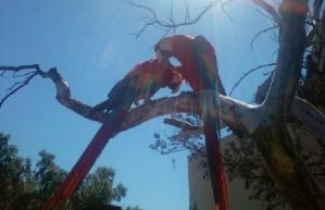 Macaws by thatkingsmanchef