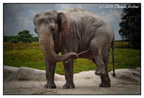 The Intelligent Elephant by Digitalbaby