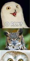 lol owls by jd000