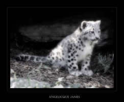 Snow Leopard Cub IV by angelicque