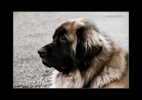 Alfred III by sxy447