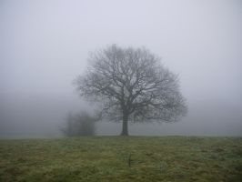 foggy tree stock by HumbleBeez