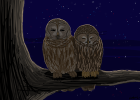 Owls by Wolf-Goddess13