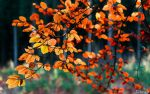 More Autumn Leaves by tvurk