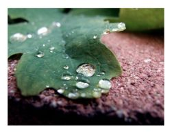 water doplet on leaf 2 by ikymagoo