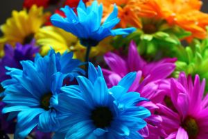 Bouquet by LifeThroughALens84