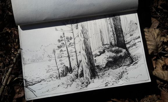 Forest sketch by Tottor