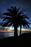 Sunset Palm by ChibiLavos