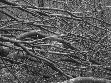 dead trees by Nicothelord