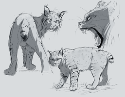 lynx sketches by azzai