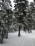 Snowy trees by Demoned146