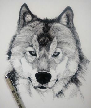 Ink Wolf by Saurav-Harsh