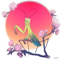Mantis by arcipello