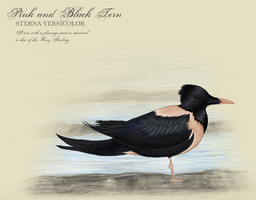Pink and Black Tern by clairestclara