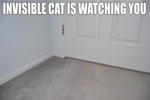 Lolcat: INVISIBLE CAT by Mjag