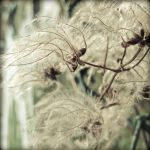 Beauty of Nature 3 by keep-smiling-lila