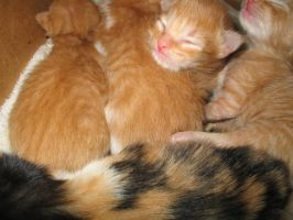 Newborn Kitties 28 by LDFranklin
