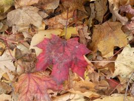 Autumn Leafs 03 by Fea-Fanuilos-Stock
