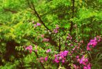 nature by pratikshya