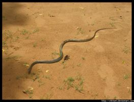 Slither by Chinsen