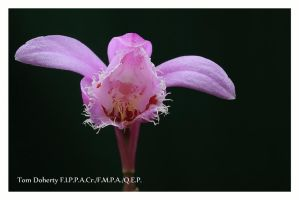 Guy's flowers 2 by PicTd