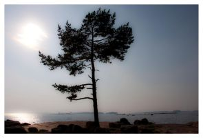 Lonely Tree by sudd