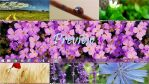 Wonderful Nature Theme Windows 8 & 8.1 by Andrei-Azanfirei