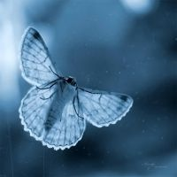 Butterfly Blues by anna-earwen