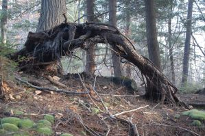 Roots by Grayash9755