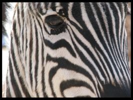 Of Stripes and . . . Stripes by PurlyZig