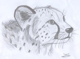 Cheetah on paper by fluffylovey