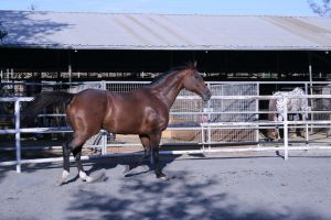 bay horse stock 22 by xbr0kendevotion