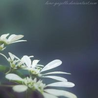 And tiny petals opened at your touch by Anina-Bird